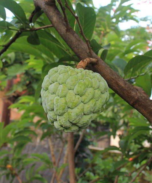 アテモヤとは?森のアイスクリームといわれる話題の果実の食べ方を紹介!