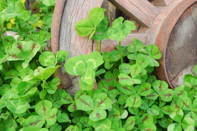 有機肥料の上手な使い方!種類別の上手な選び方や堆肥との違いを解説
