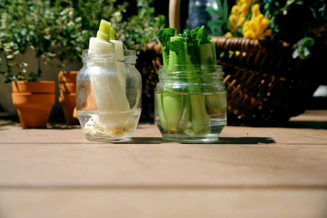 再生野菜(リボベジ)おすすめ6選!再生野菜の魅力や育てやすい野菜をご紹介!