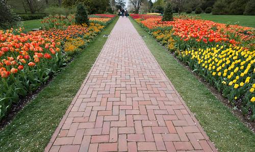 庭にレンガを置くだけでおしゃれな小道にDIY!敷き方・デザインも紹介