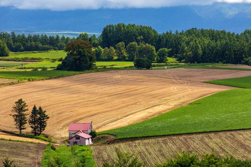 土壌消毒とは?その方法・手順やメリットを紹介!連作障害の対策にも