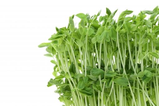 豆苗を上手に保存する方法は?おすすめの食べ方・レシピも5つ紹介!