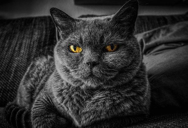 猫に困ったときの猫対策グッズを7つ紹介!効果があると評判のものは?