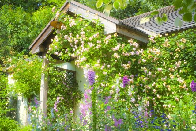 初夏の庭をいろどる花がきれいなハーブ10選!育て方のコツと楽しみ方をご紹介