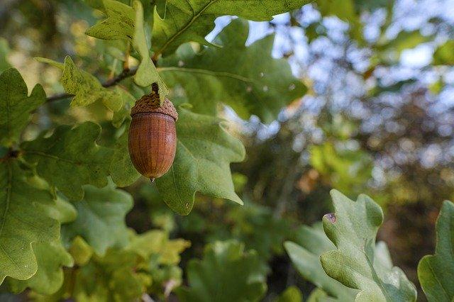 スダジイとは?植物としての特徴・見分け方から利用法や育て方まで解説