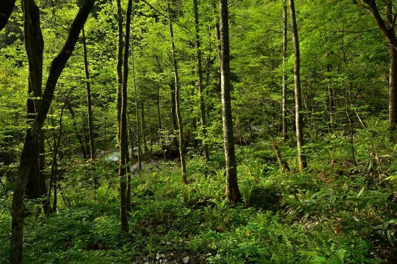 タカノツメ(樹木)とは?名前の由来や葉や実の特徴・見分け方を紹介