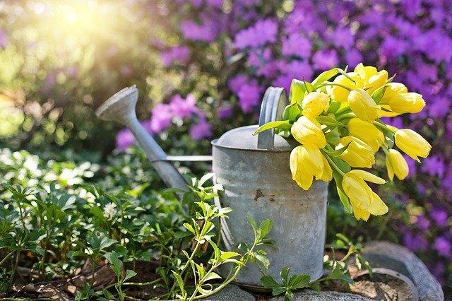 植栽とは?ガーデニング用語としての意味や使い方をわかりやすく解説