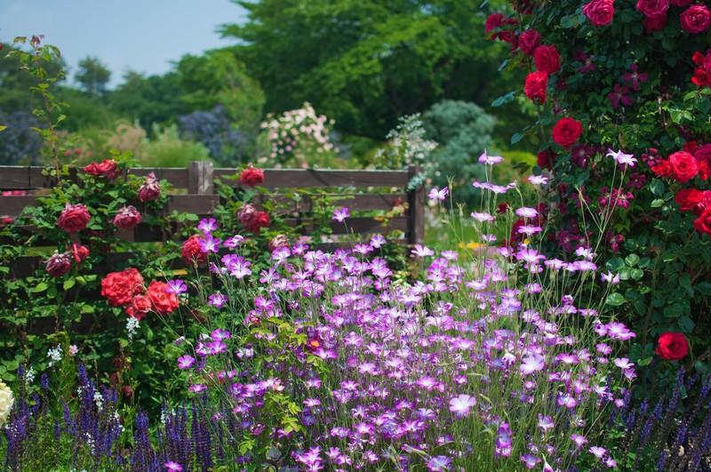 春植えにおすすめの多年草・宿根草12選!ほったらかしでも毎年咲くのは?