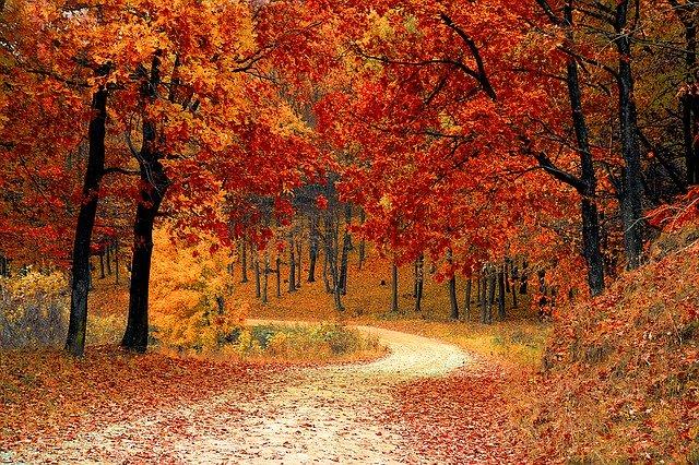 秋植えにおすすめの多年草・宿根草8選!ほったらかしでも毎年咲くのは?