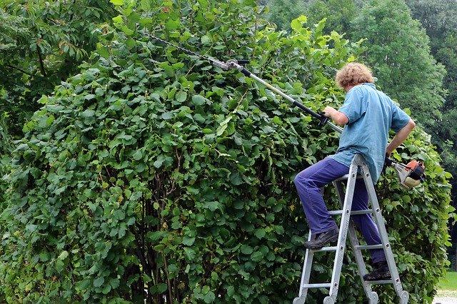 園芸や植木のお手入れにおすすめの刈込鋏8選!使い方や選び方も解説!
