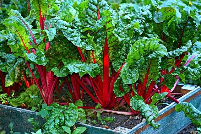 8月に植える・植えられる野菜12選!真夏でも植え付けできる野菜は?