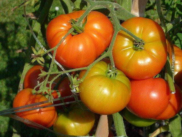 野菜栽培を始める上で知っておくべき基礎知識!5つのポイントを解説!