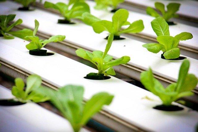 水耕栽培キットおすすめ人気7選!手軽に室内での水栽培を始めてみては?