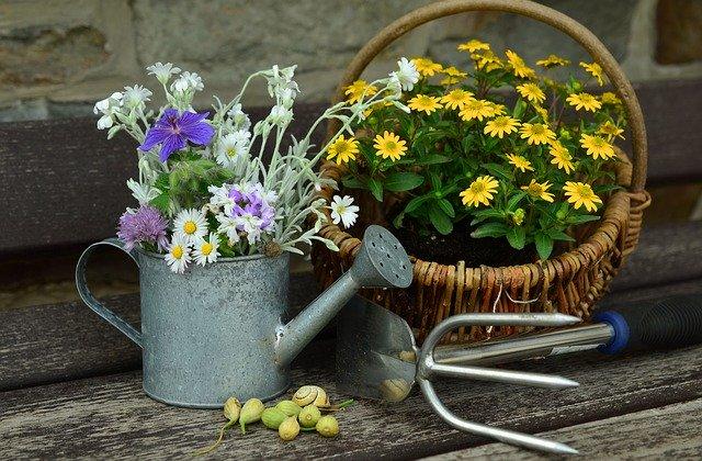 ベランダガーデニングにおすすめの植物13選!おしゃれで人気の植物は?