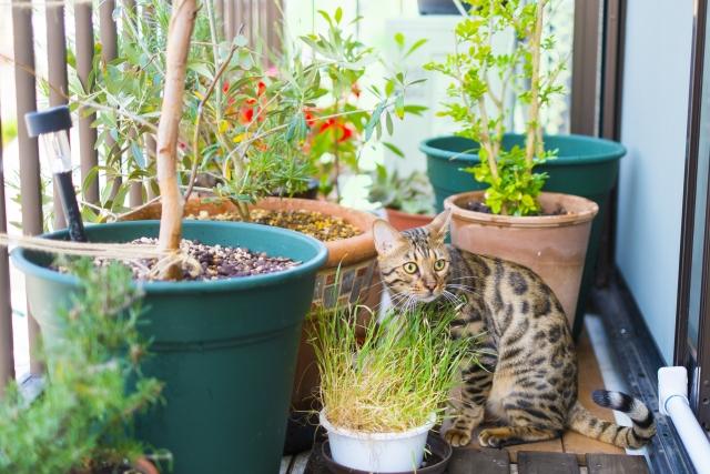 ベランダガーデニングの始め方!初心者向けの知識&育てやすい植物12選!