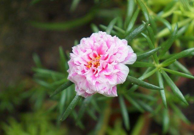 7月10日の誕生花とは?特徴や育て方・ゆかりのある有名人もご紹介!