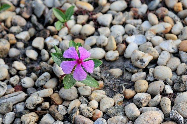 7月13日の誕生花?色ごとの花言葉や育て方・誕生石に記念日もご紹介!