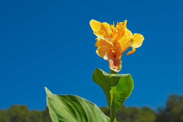 7月15日の誕生花!特徴や育て方・誕生石に記念日もご紹介!