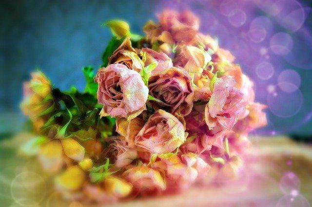 バラをドライフラワーにする方法!きれいに乾燥して長期保存する秘訣