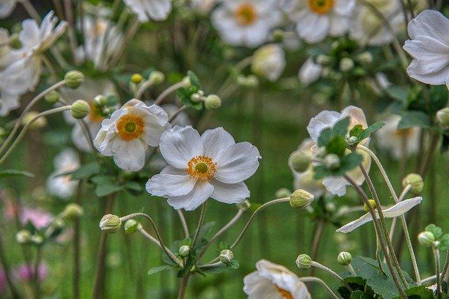 秋に咲く花20選!冬まで長く楽しめる品種は?花言葉も併せてご紹介