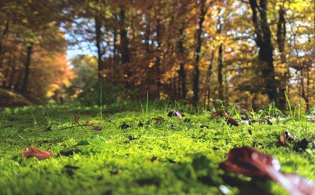 クラピアとは?植物としての特徴やグランドカバーとしてのメリットを紹介!