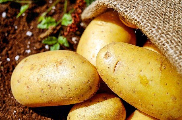 袋栽培とは?ベランダを汚さず野菜を育てる方法やおすすめ商品を紹介