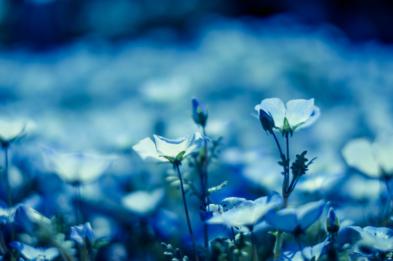 開花期間の長い花40選!宿根草や一年草の中で一番長く咲き続ける花は?