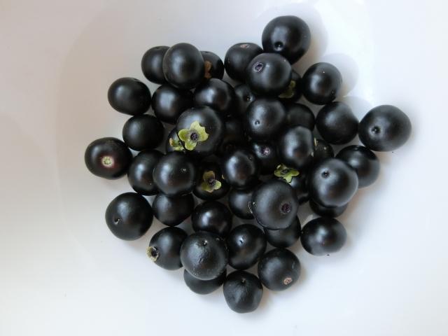 ハックルベリーとは?味や効能などの特徴からおすすめの食べ方まで紹介!