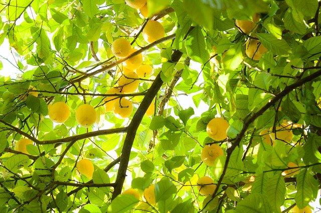 ゆず(柚子)の簡単人気レシピ10選!おかずや長期保存向けの食べ方は?