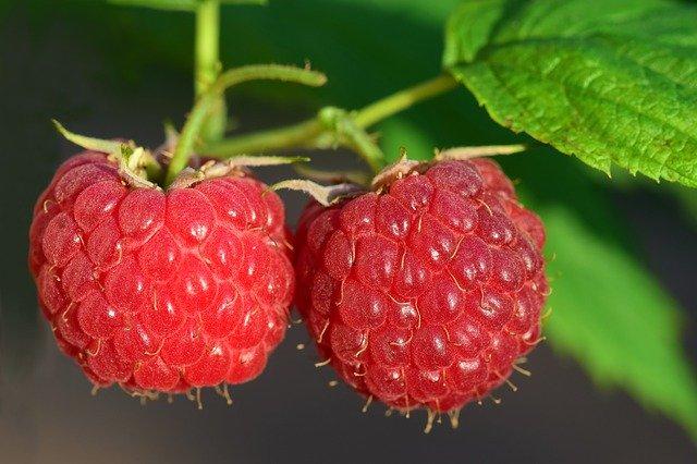 木苺(キイチゴ)とは?ラズベリーなどベリー系の違い・見分け方を解説