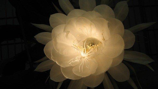 7月18日の誕生花をご紹介!特徴や育て方・誕生石にゆかりの有名人も!