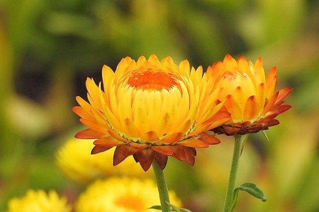 7月19日の誕生花は何?特徴・花言葉や誕生石に記念日もご紹介!