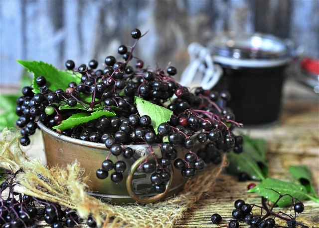 エルダーベリーとは?シロップの効能・飲み方や苗からの育て方を紹介!