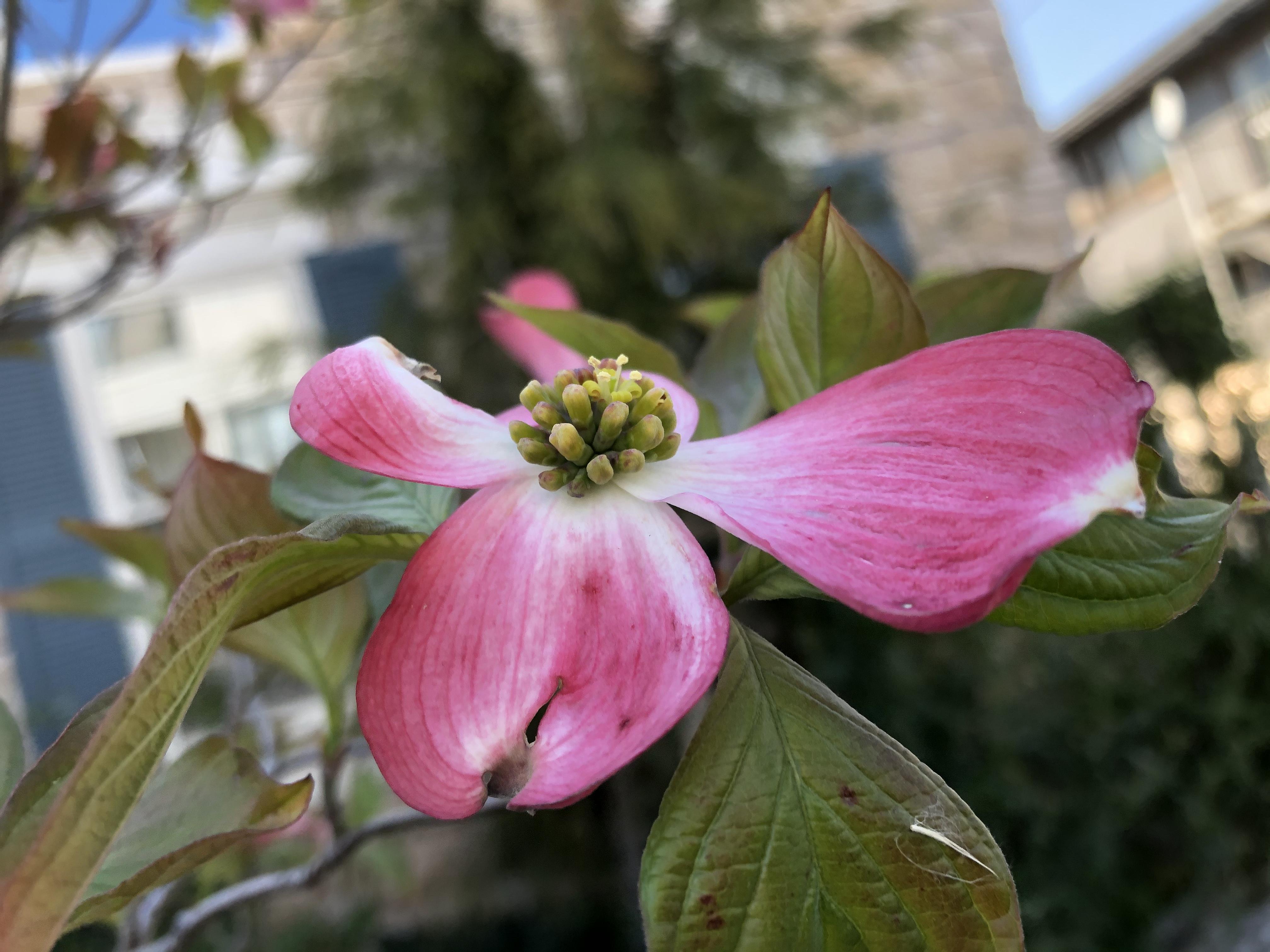 花びらのない植物14選!各種の分類や花の形など特徴を紹介!