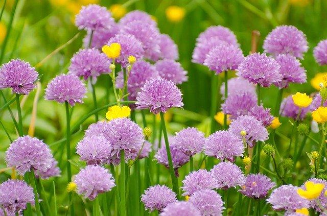 5月に植え付ける花のおすすめ品種13選!各種の特徴や花言葉を紹介