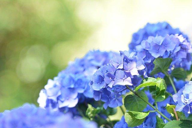6月に植え付ける花のおすすめ品種15選!各種の特徴や花言葉を紹介!