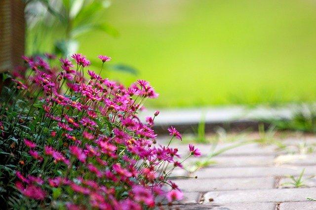 7月に植え付ける花のおすすめ品種20選!各種の特徴や花言葉を紹介!