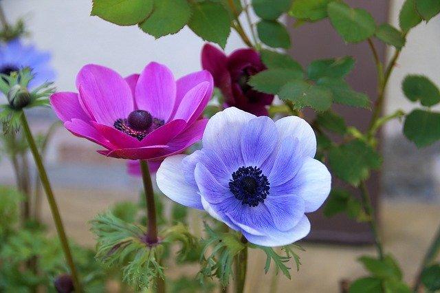 9月に植え付ける花のおすすめ品種12選!各種の特徴や花言葉を紹介!