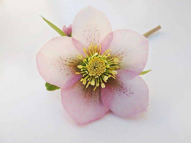 12月に植え付ける花のおすすめ品種10選!各種の特徴や花言葉を紹介