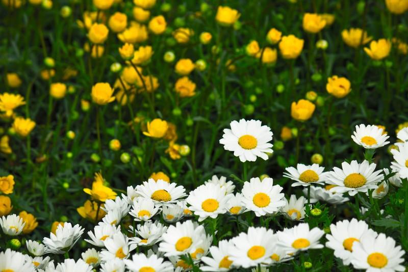 2月に植え付ける花のおすすめ品種15選!各種の特徴や花言葉を紹介!