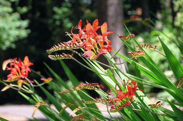 8月3日の誕生花は何?特徴・育て方や誕生石に記念日もご紹介!