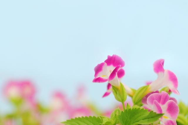 8月6日の誕生花!特徴・育て方や誕生石にゆかりの有名人もご紹介