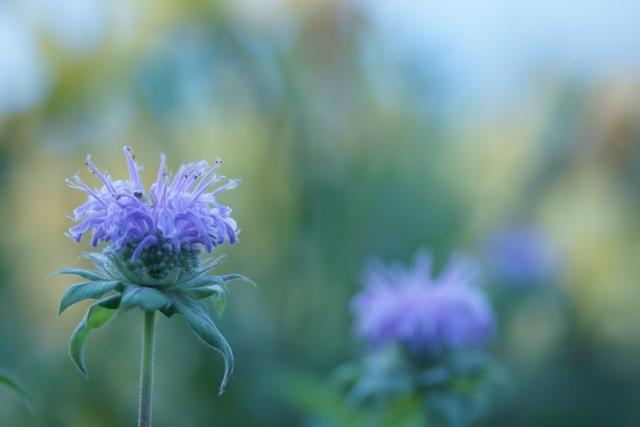 8月9日の誕生花!特徴や育て方・誕生石にゆかりの有名人もご紹介