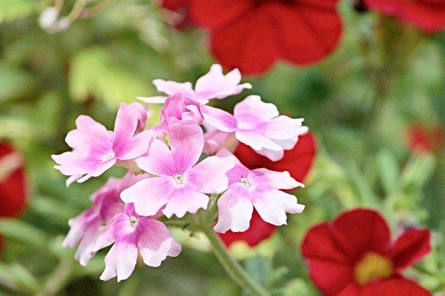 8月12日の誕生花は?色ごとの花言葉や育て方・記念日もご紹介!
