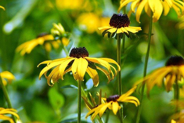 8月13日の誕生花とは?特徴・花言葉や誕生石に記念日もご紹介!