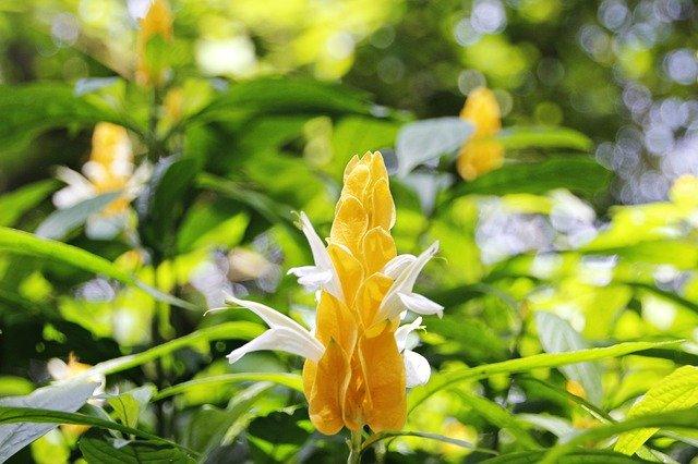 8月16日の誕生花は何?特徴・育て方や誕生石にゆかりの芸能人もご紹介!