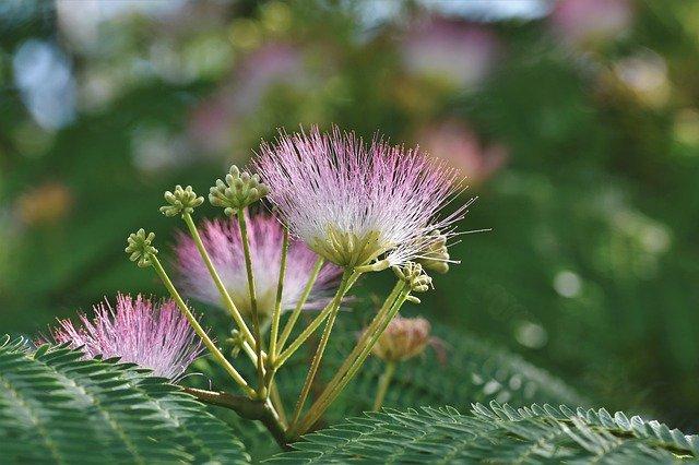 8月17日の誕生花は何?特徴や育て方・誕生石に記念日もご紹介!
