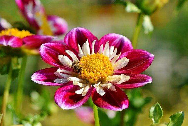 8月21日の誕生花とは?特徴や育て方・誕生石にゆかりの有名人もご紹介!