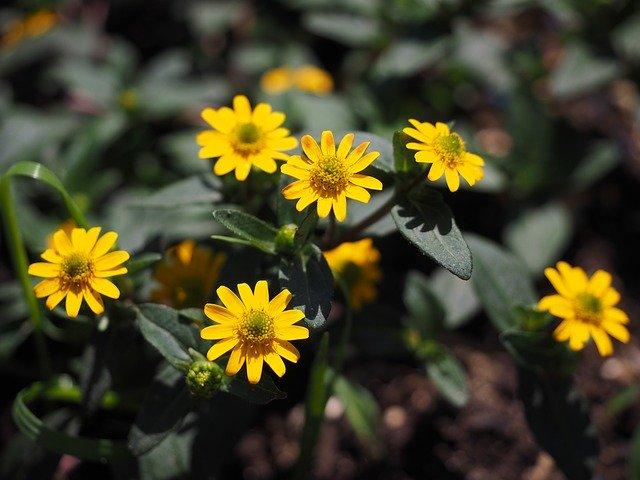 8月22日の誕生花は何?特徴・育て方や誕生石に記念日もご紹介!