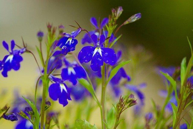 8月23日の誕生花とは?特徴や育て方・記念日にゆかりの有名人もご紹介!